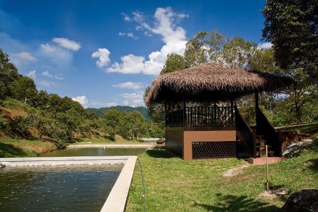 Tanah Aina Resorts - Farouq - 4